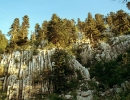 Dinaric calcareous fir forest Croatia